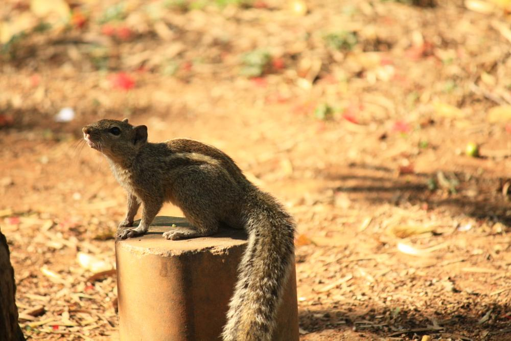 Photo in Animal #squirrel