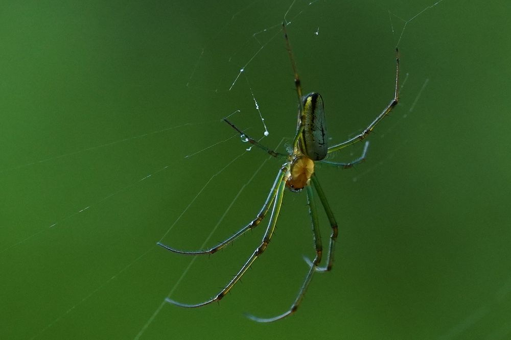 Photo in Macro #forest #spider #green