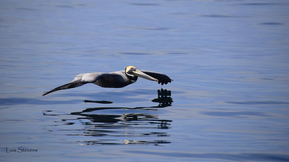 Photo in Animal #birds #gliding #nature #wildlife