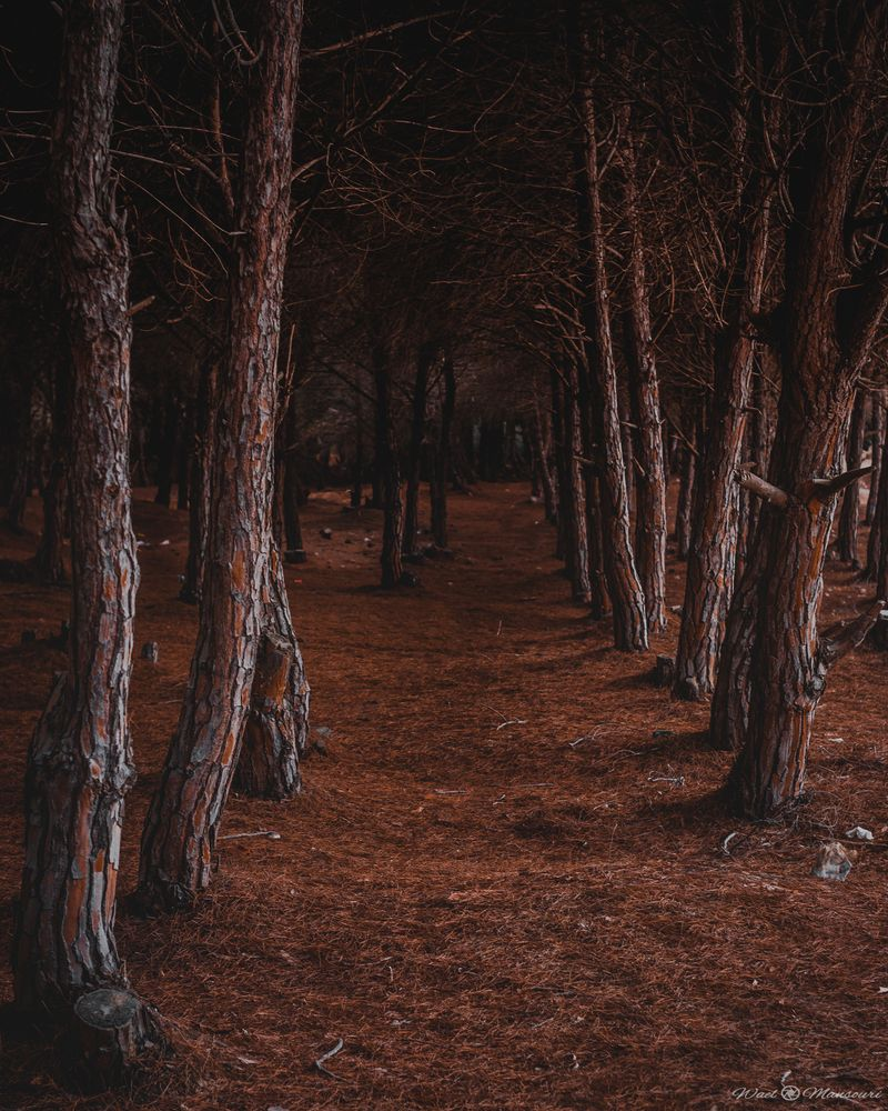 Photo in Nature #path #dark #forest #trees #scary