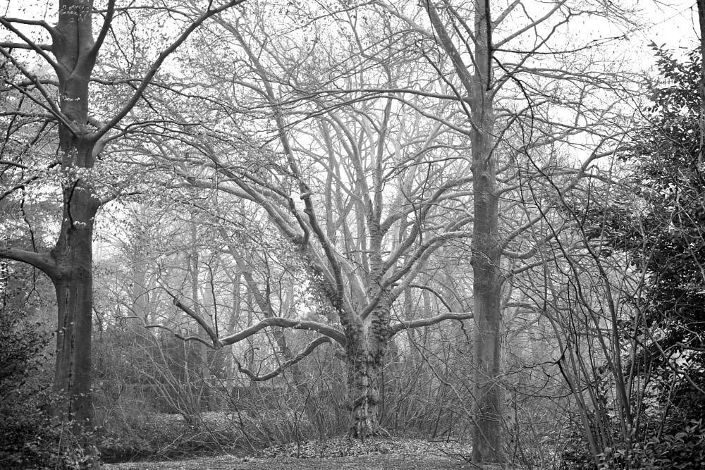 Photo in Black and White #schloss #romantik #kunst #art