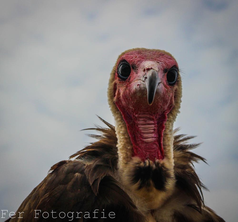 Photo in Animal #bestof2014 #fer #birdie
