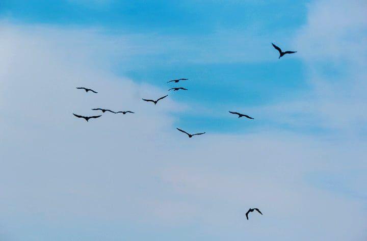 Photo in Random #birds #birds in flight #flying #nature #sky