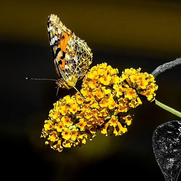 Photo in Random #butterfly #nature #flowers