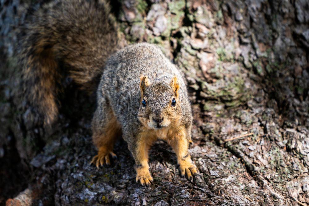 Photo in Animal #urban #wildlife #squirrel #brown #animal