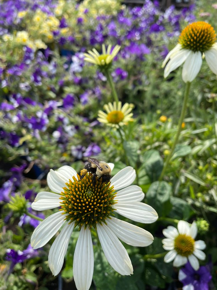 Photo in Nature #to bee or not to bee #bee   on a flower