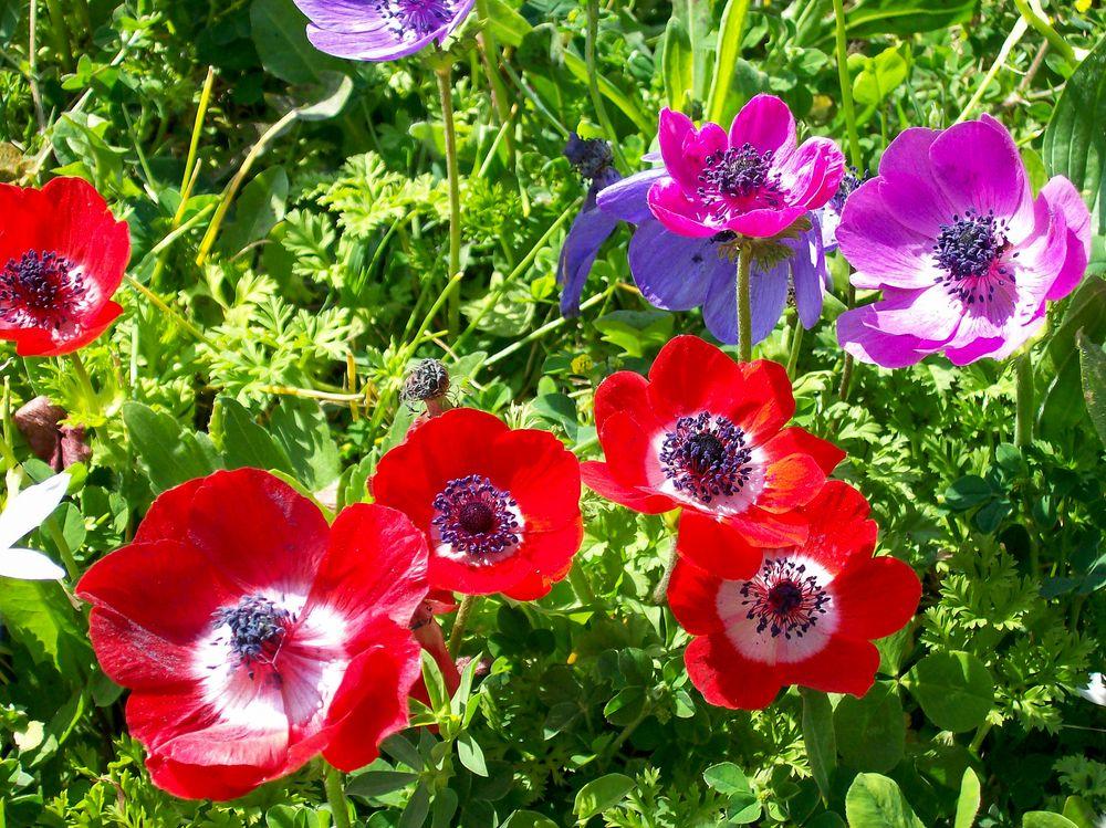 Photo in Nature #flowers #fiori #nature #natura #colors #sunlight #outdoor