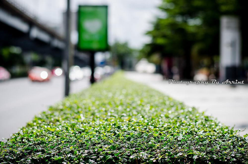 Photo in Random #bush #line #bush line #พุ้มไม้ #รั้ว #ต้นไม้ #three
