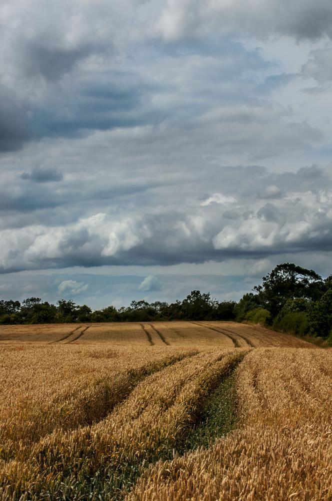 Photo in Landscape #grain #harvest #summer