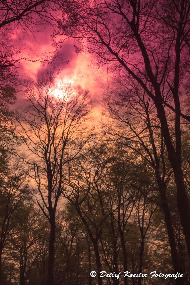Photo in Nature #sky #fire #sonnenuntergang #wald #wood #wolken #clouds #himmel #deutschland #herdecke #nrw #germany