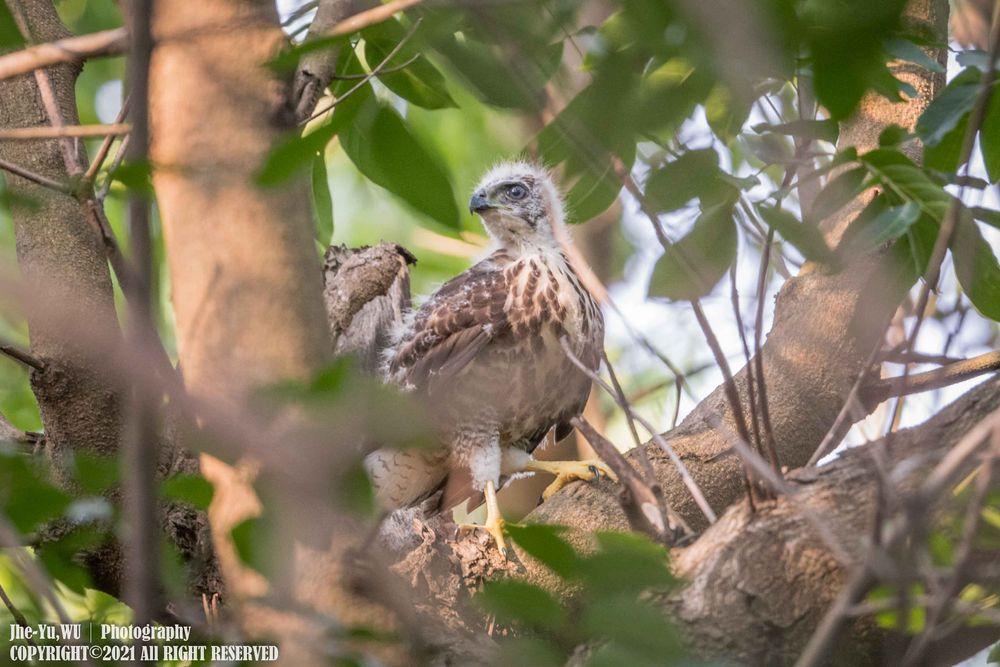 Photo in Animal #i am nikon #nikon d850 #nikon 556pf #wildlifephotography #wildbirds #wildlife #birdphotography #birding #birdlife #taiwan birds