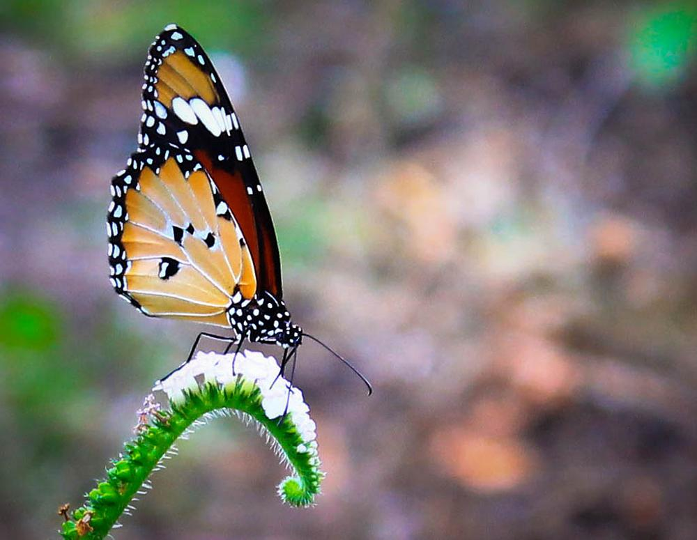 Photo in Macro #buterfly #beautiful
