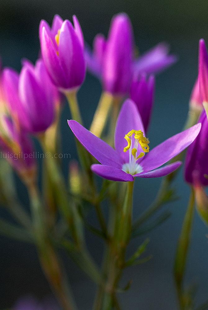 Photo in Nature #flowers #nature #macro