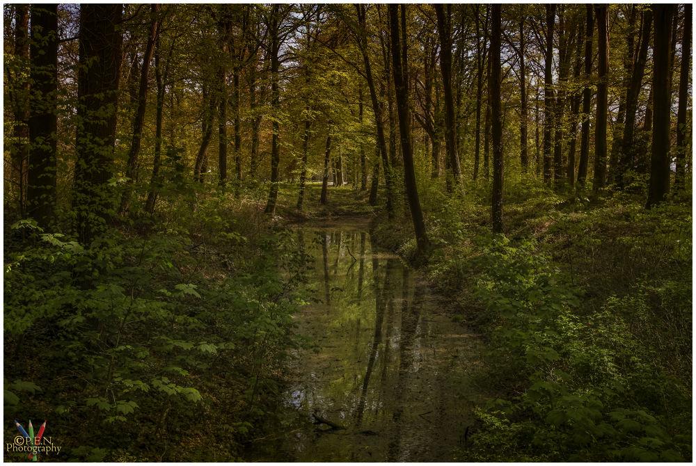Photo in Random #belgium #flanders #deep #forest #bos #diep #2013 #ypa2013 #water #mirror #reflection