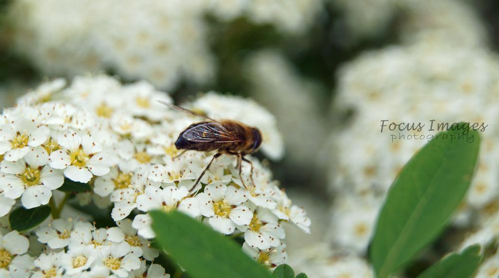 Photo in Random #animal #flower #macro #ypa2013