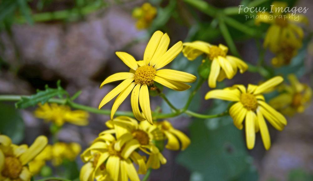 Photo in Random #weed #macro #yellow #ypa2013