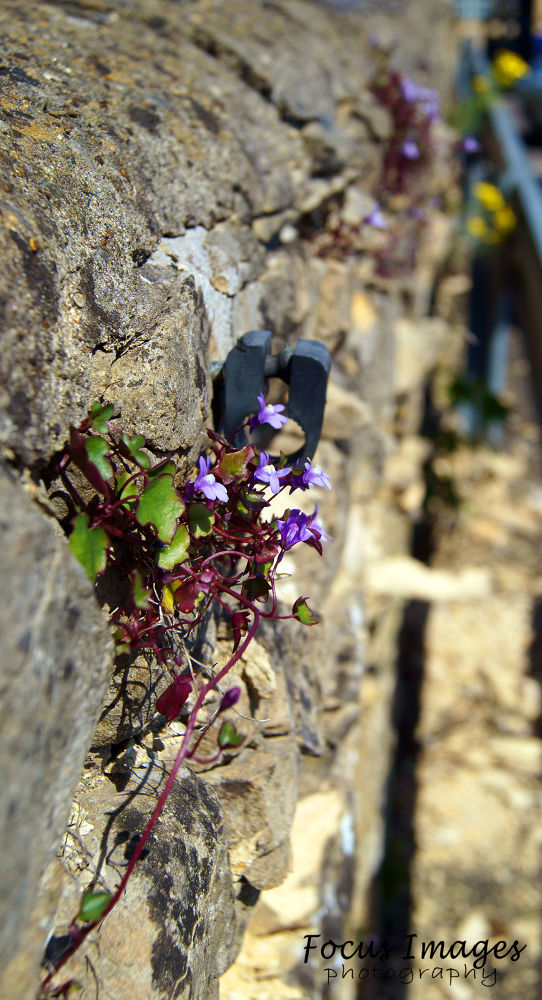 Photo in Nature #flower #wall #ypa2013 #sun
