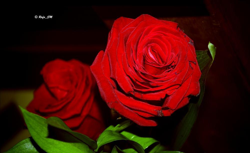 Photo in Nature #roses #rosas #rosas rojas