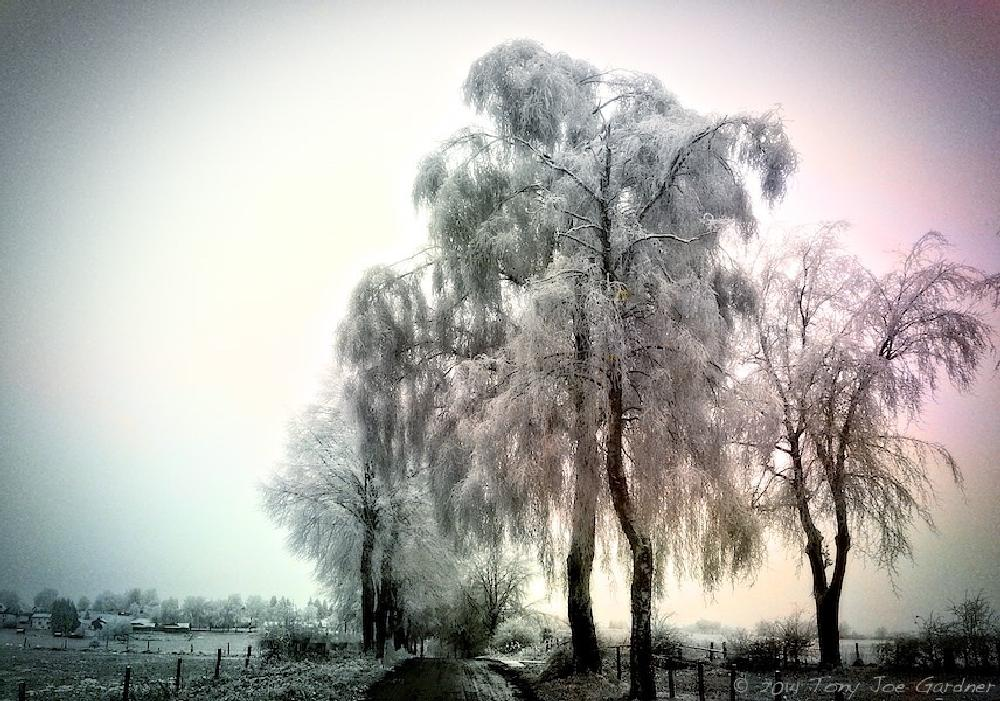 Photo in Nature #winter #tree #snow #ice #landscape #nature