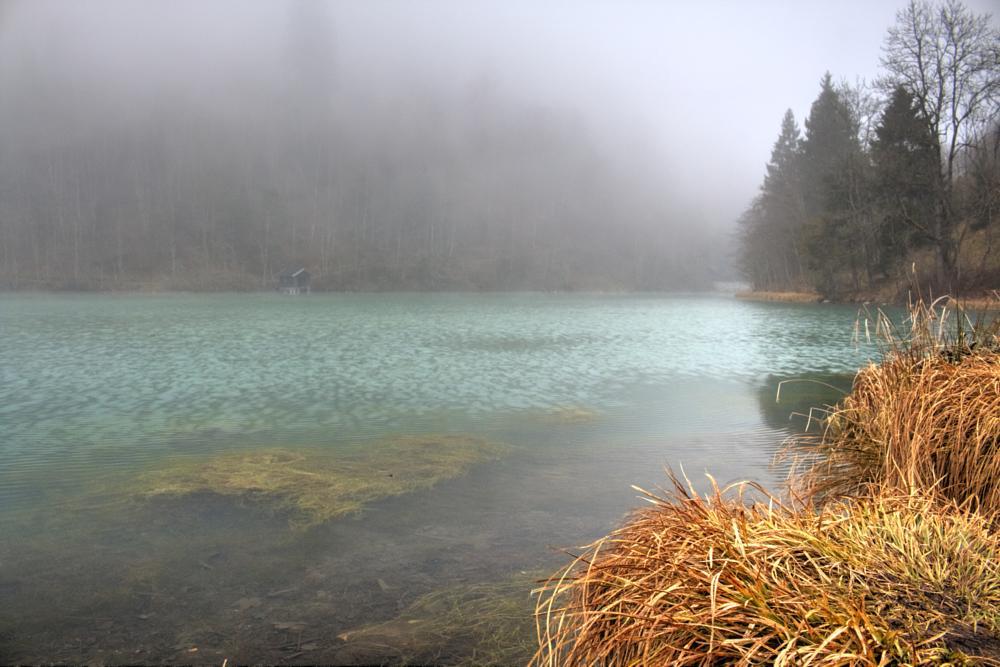Photo in Nature #klammsee #lake #water #kaprun #salzburg #austria #nature #fog #foggy #trees #mountains #scenic #gras #winter