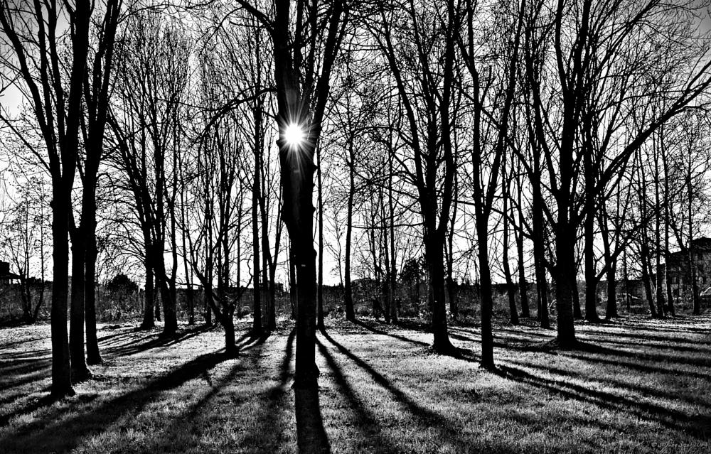 Photo in Black and White #shadow #light #b&w #sun
