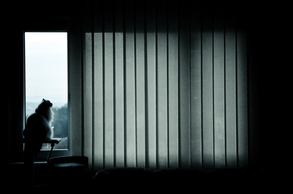 Photo in Animal #nikon #nikond5100 #window #cat #dark #silhouette #kitty #ragdoll