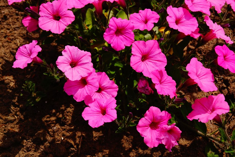 Photo in Nature #pink #spring #flower