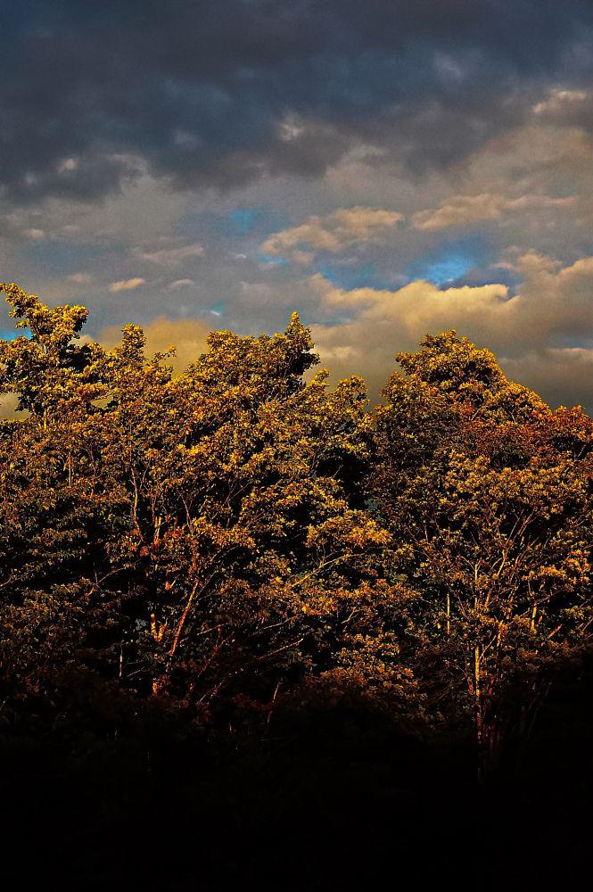 Photo in Nature #dusk #light #trees