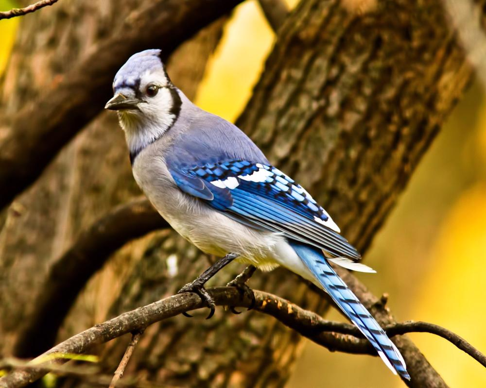 Photo in Animal #animals #wildlife #birds #nature