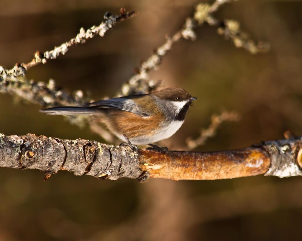 Photo in Animal #animals #birds #wildlife #nature