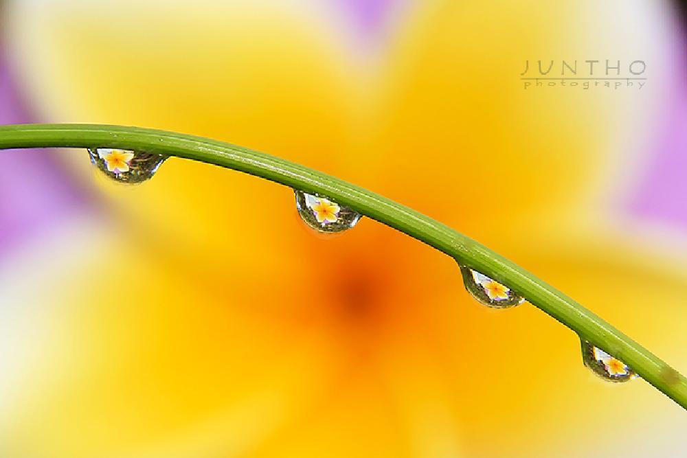 Photo in Still Life #flower #refleksi #yelow #nature