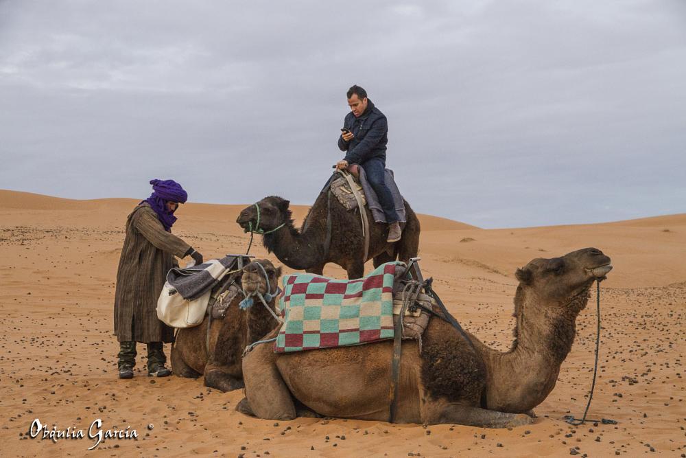 Photo in People #maroc #ergchebbi #desert #camel