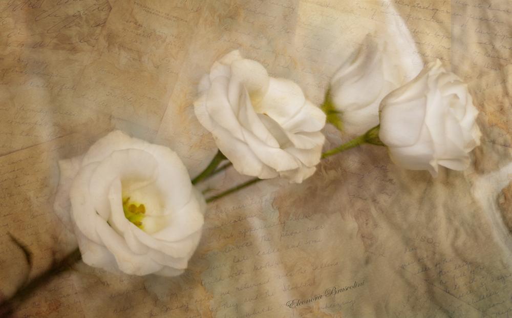 Photo in Random #flower #letters #past