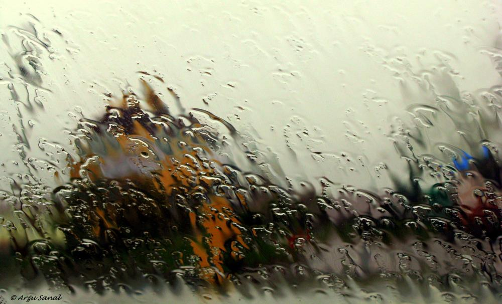 Photo in Random #rain