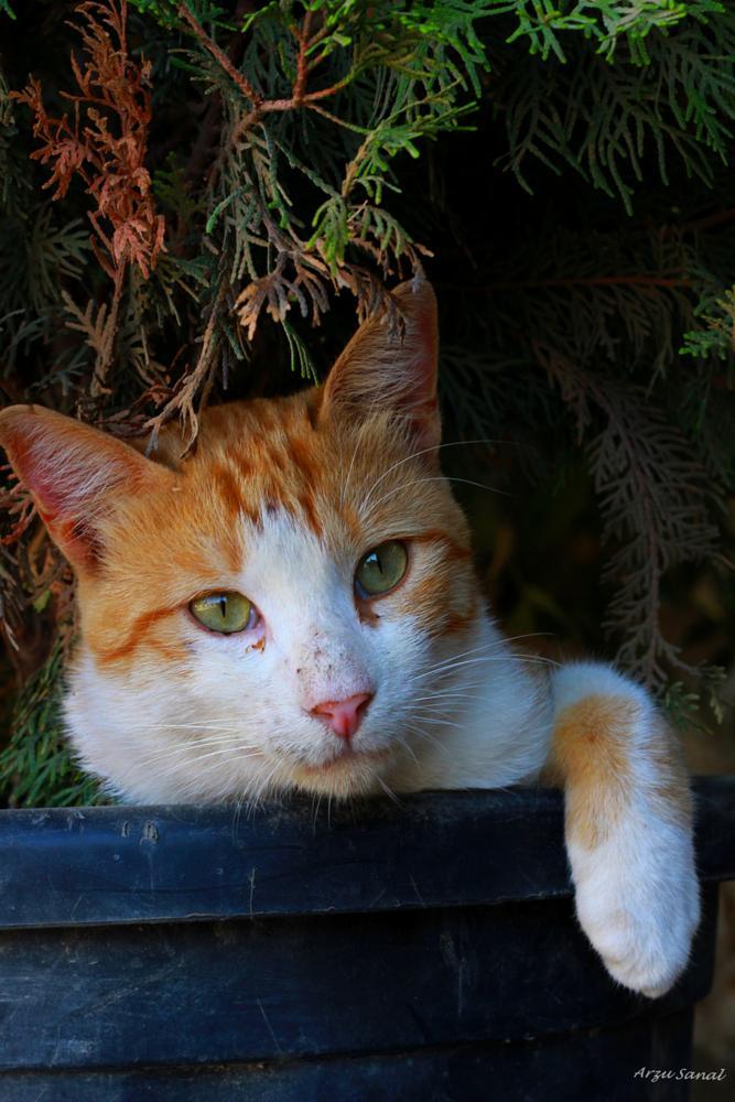 Photo in Animal #cat #portre
