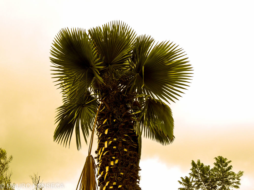 Photo in Random #brazil #brasil #p510 #minas gerais #maurofonseca #mauro fonseca #palmeira