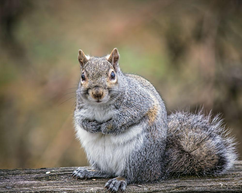 Photo in Nature #canon #nature #squirrels
