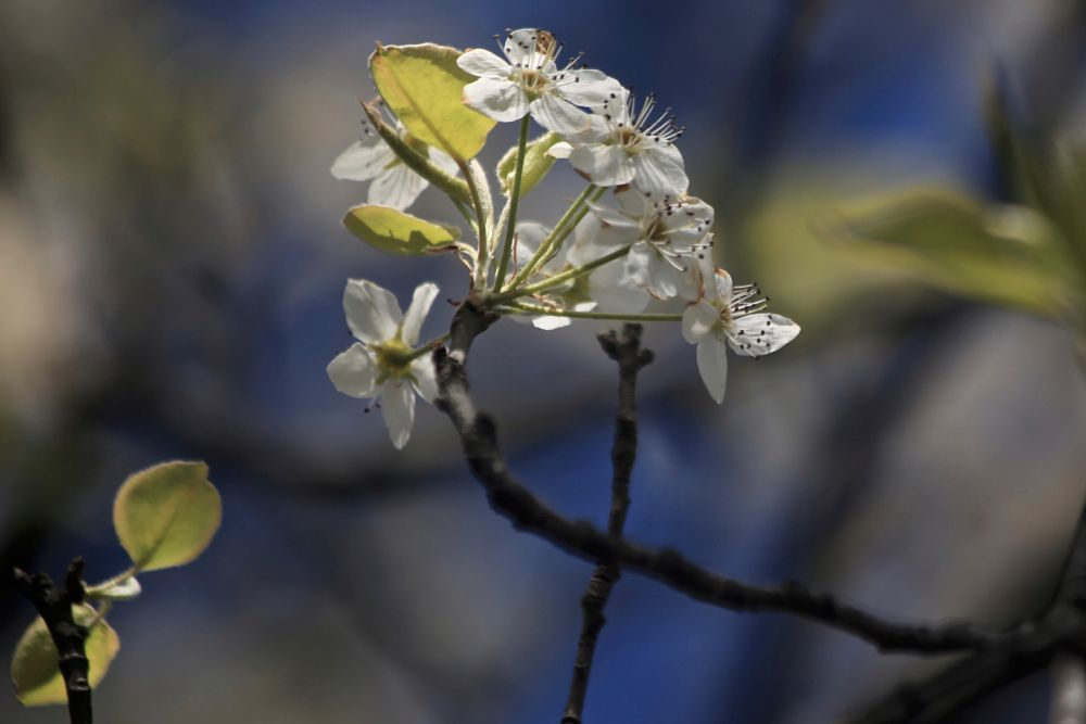 Photo in Nature #blossomseason #weather #snowstorm