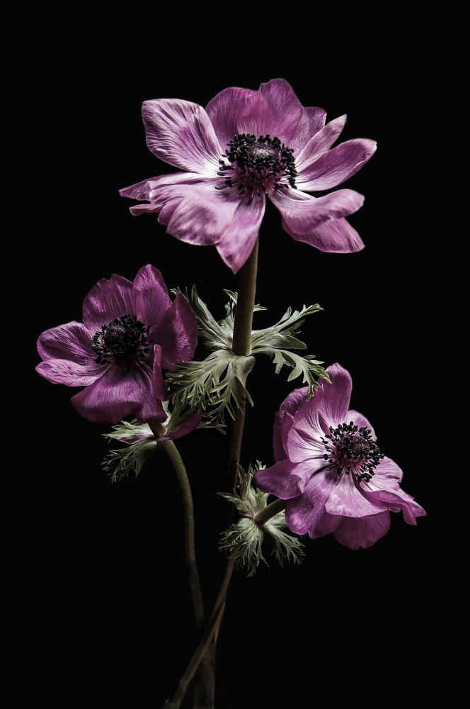 Photo in Random #flower #anemone
