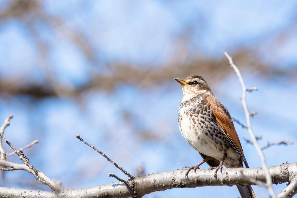 Photo in Animal #birds #animals #nature #japan #nikon #sigma #kawaii #cute