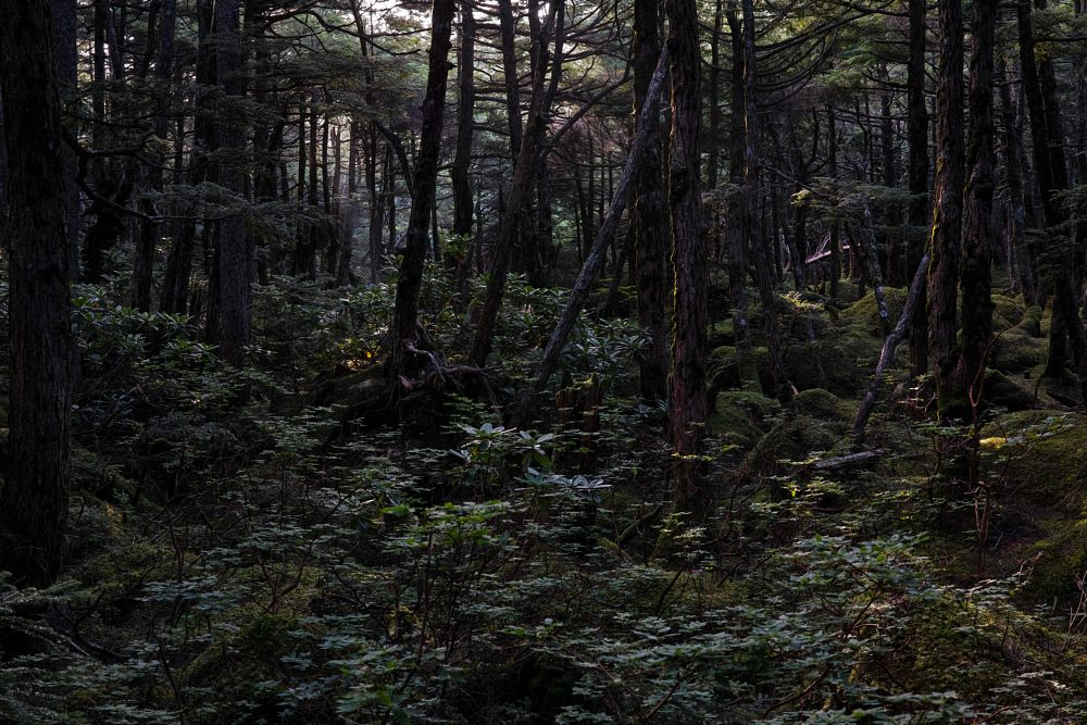 Photo in Landscape #japan #sigma #dp2 #nature #merrill #foveon #landscape #green #woods