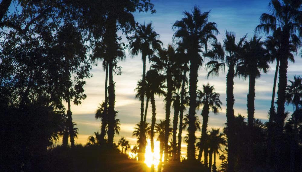 Photo in Random #palmsringssunrise