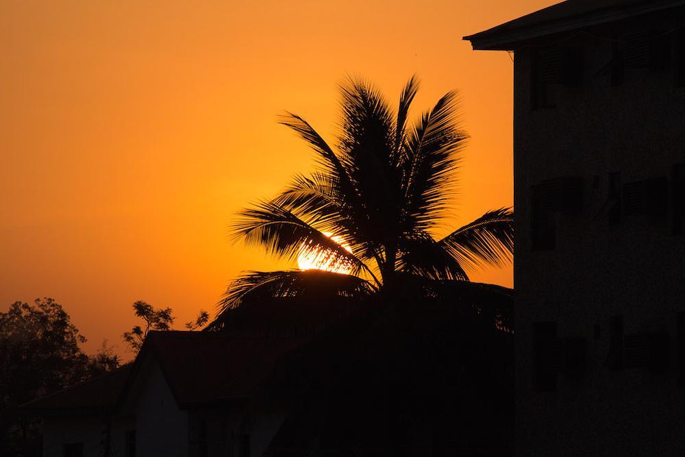 Photo in Random #nature #sunrise #palmtree #outdoor