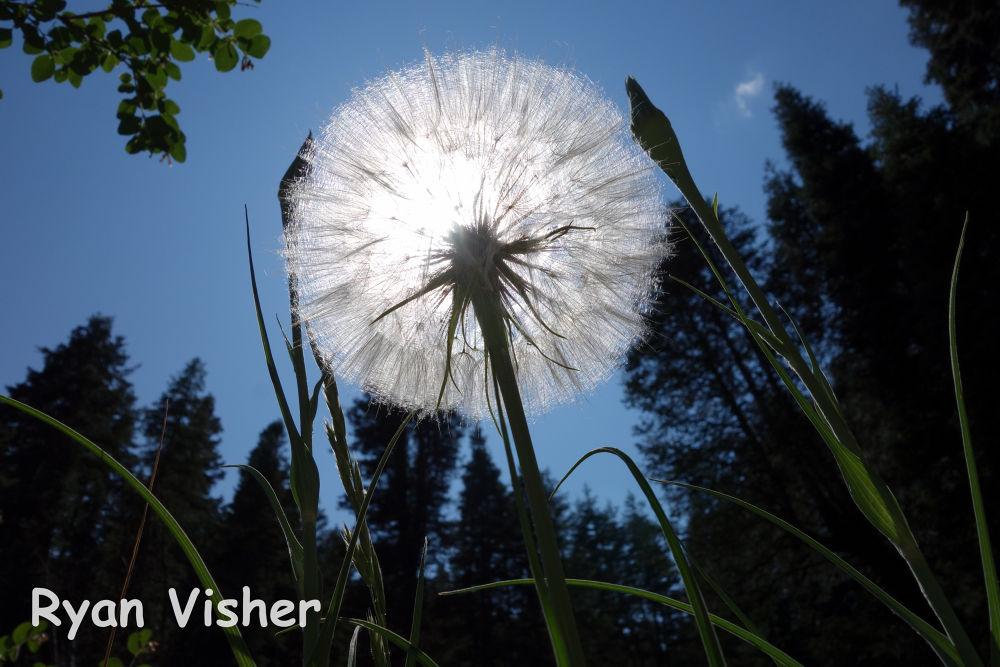 Photo in Nature #flower #sun #abstract #nature #utah #salt lake #milcreek #macro #ypa2013