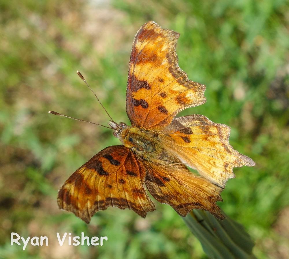 Photo in Nature #macro #nature #butterfly #utah #salt lake #milcreek #ypa2013