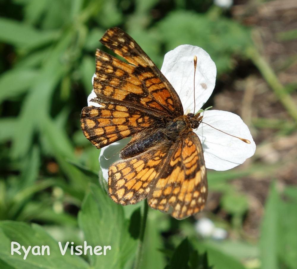 Photo in Nature #butterfly #macro #utah #nature #salt lake #milcreek #flower #ypa2013