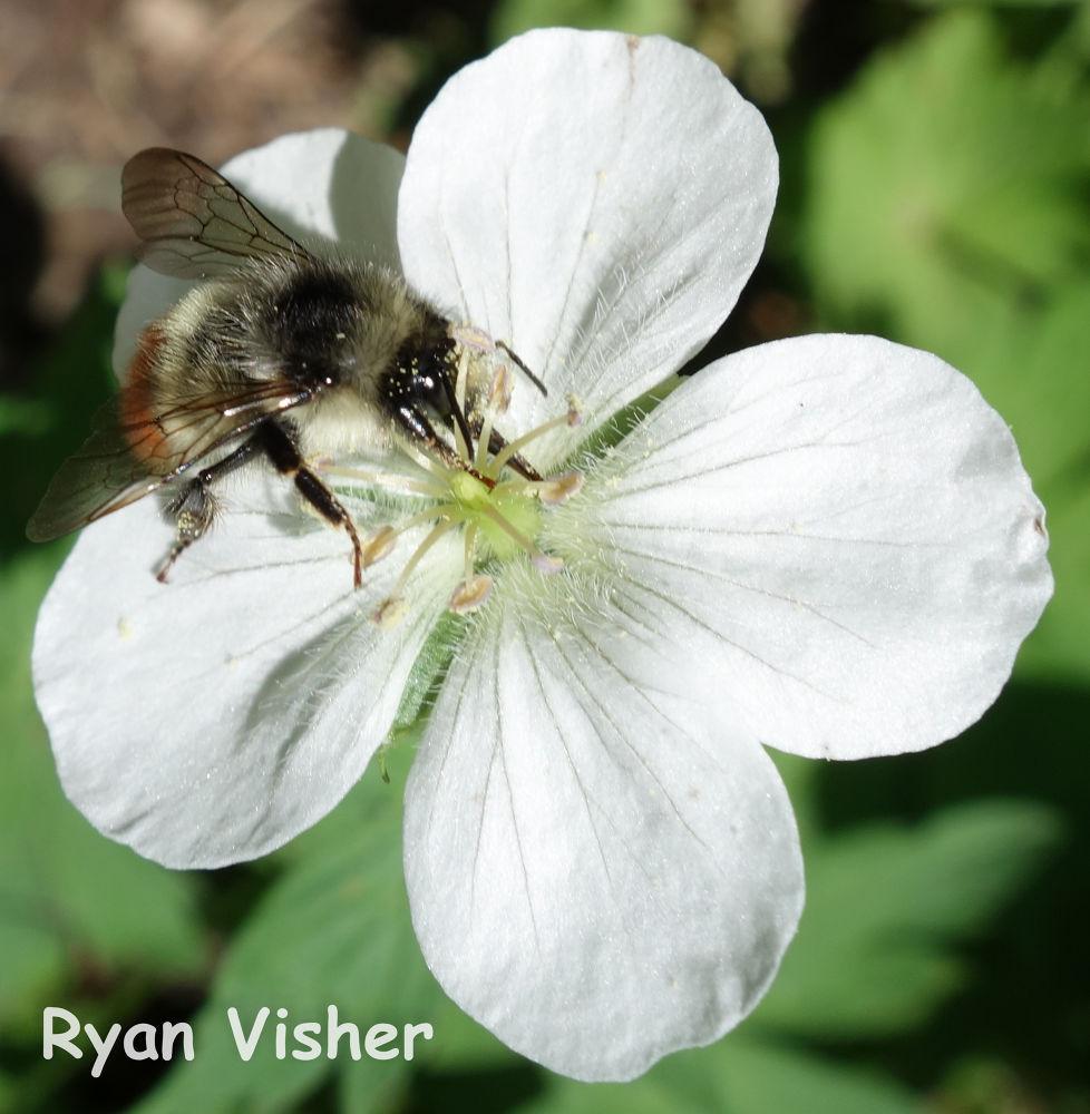 Photo in Nature #bee #utah #salt lake #nature #macro #flower #milcreek #ypa2013