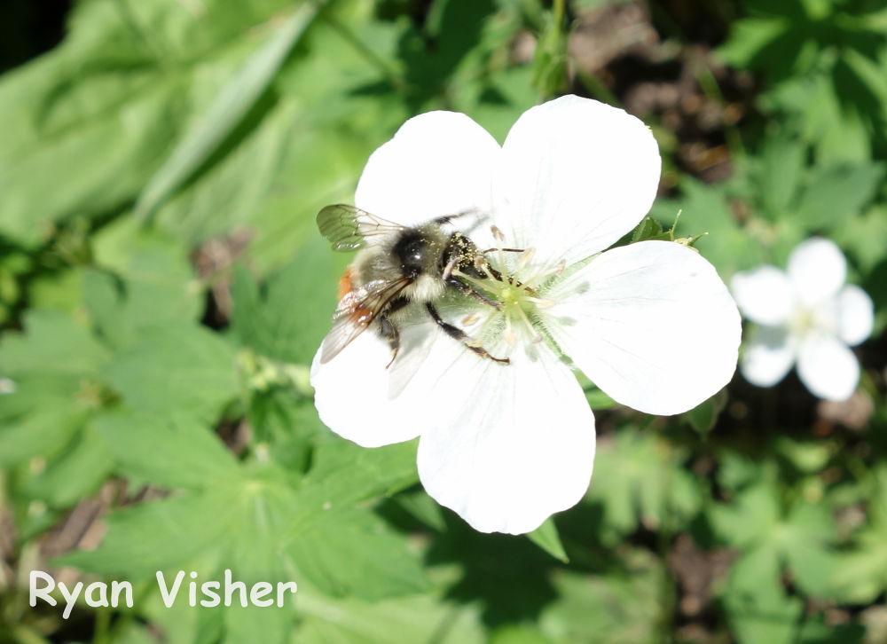 Photo in Nature #flower #bee #utah #milcreek #macro #ypa2013 #nature #pollen