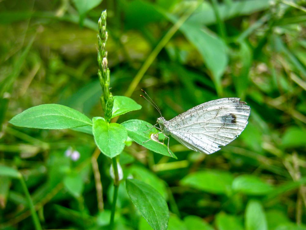 Photo in Animal #butterfly #nature #wings #green