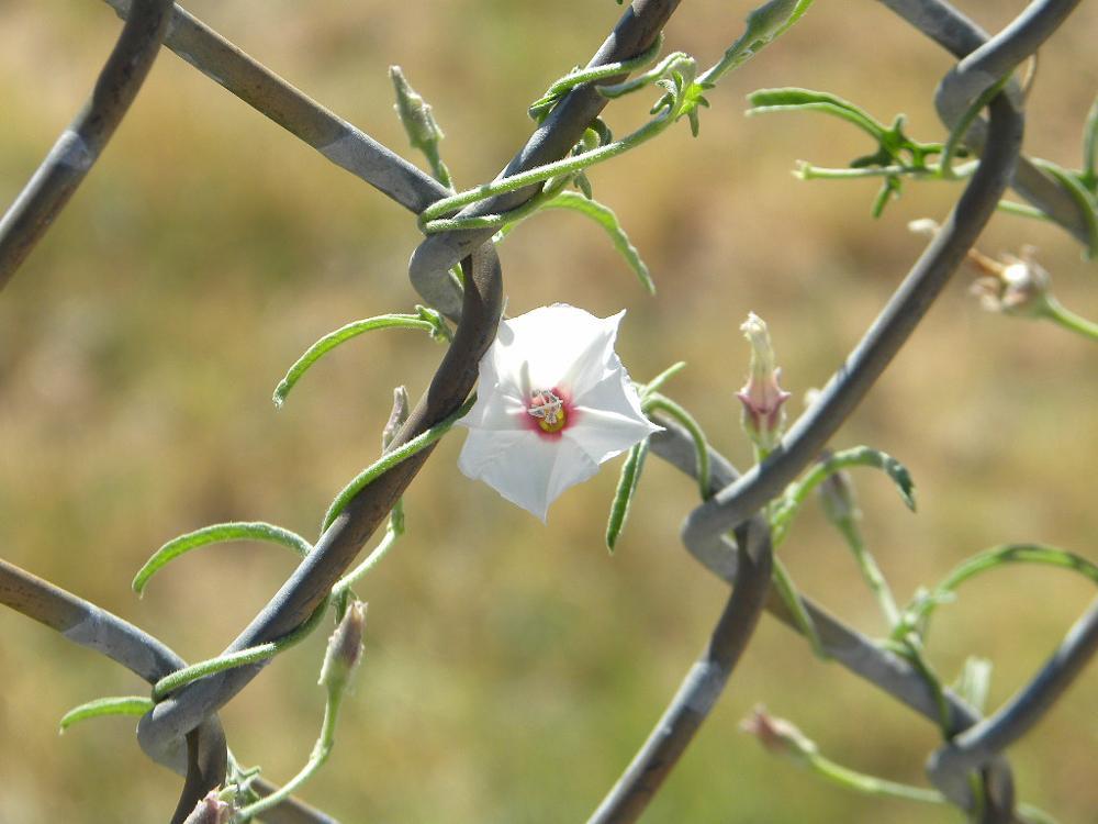 Photo in Nature #flower #bloom #vine